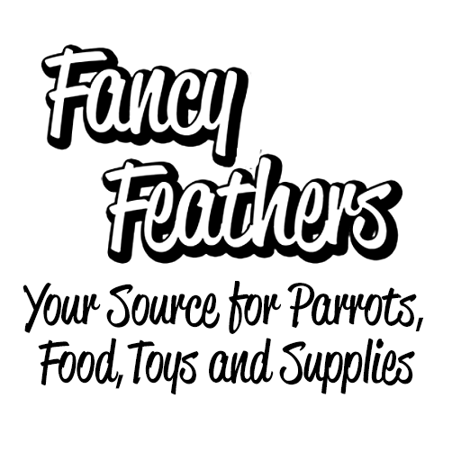 Fancy Feathers Parrot Store